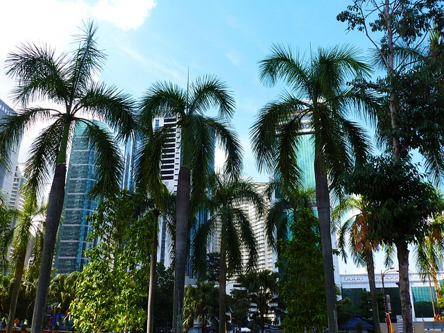 palm-trees-992217_640