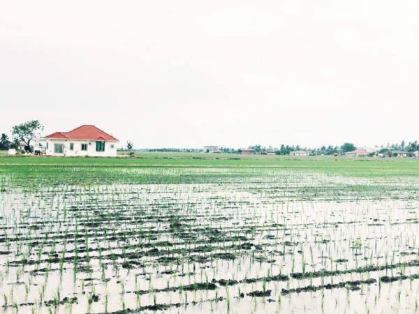 マレーシアの田舎