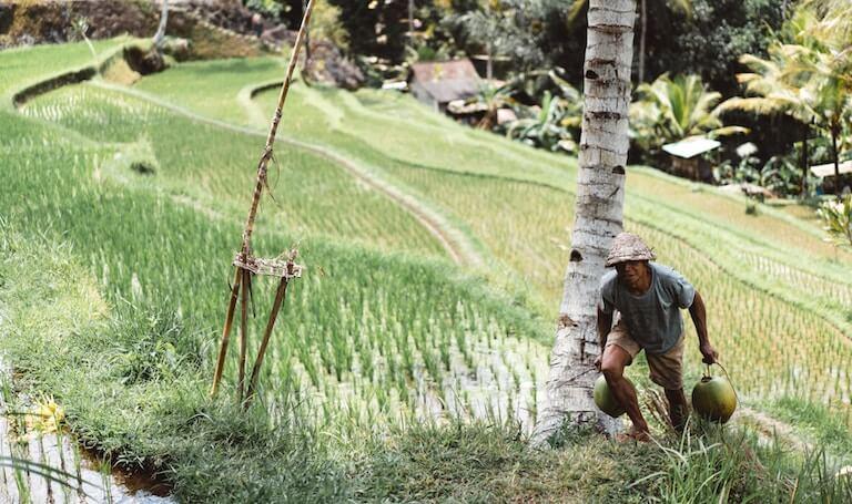 インドネシア 農業