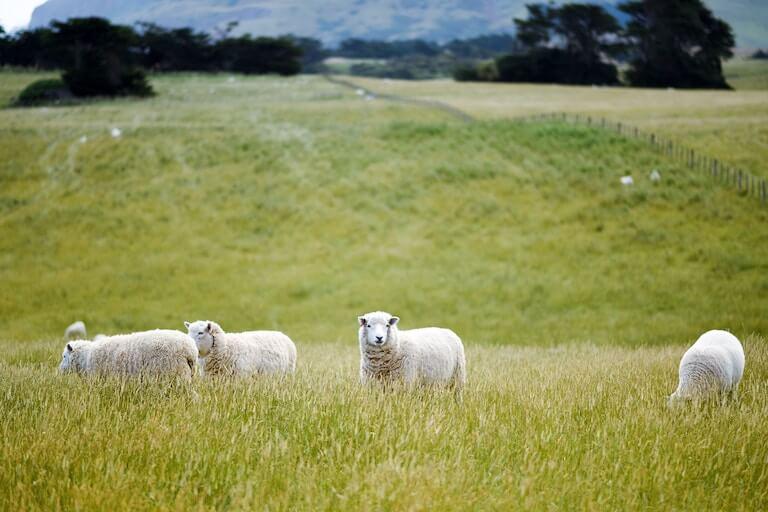 ニュージーランド  風景